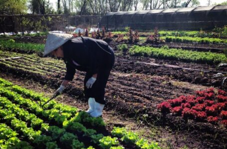 Organizers Say Urban Agriculture Is Not Just a Hobby, It's an Act of Resilience