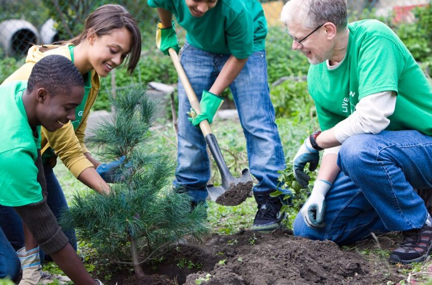 Measuring Equity Through City Trees